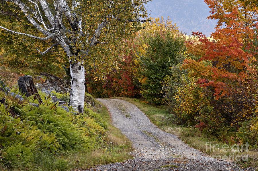 Gravel Photograph - Autumn Road - D005840 by Daniel Dempster