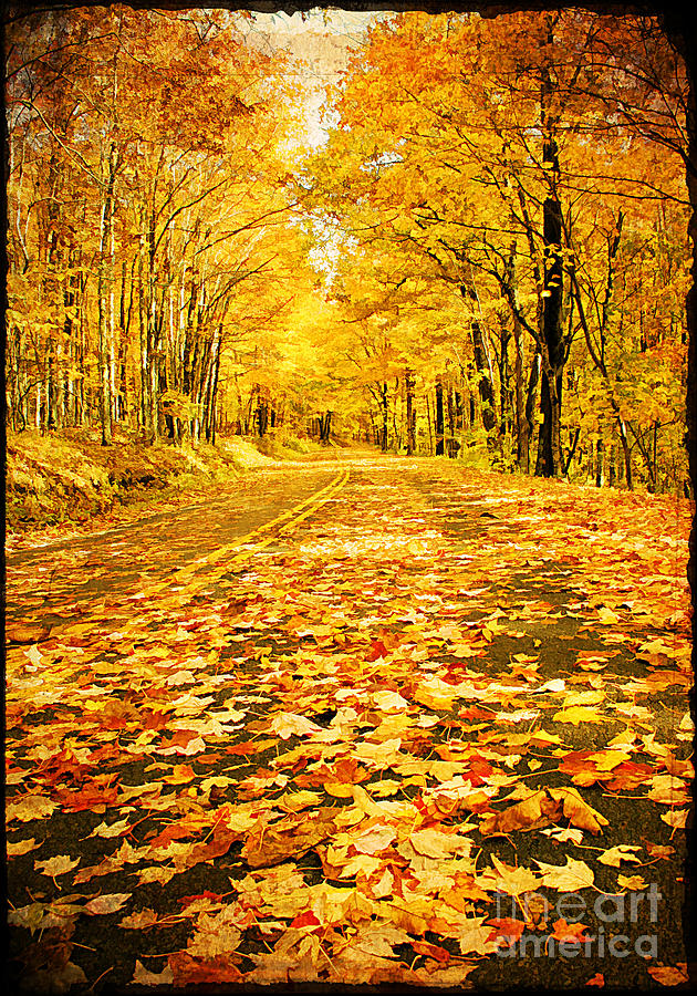 Autumn Photograph - Autumn Road by Darren Fisher