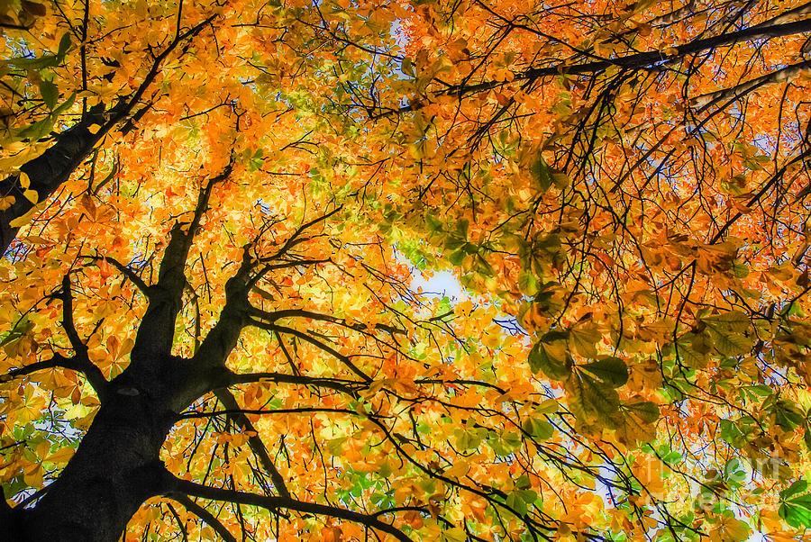 Orange Photograph - Autumn Sky by Hannes Cmarits