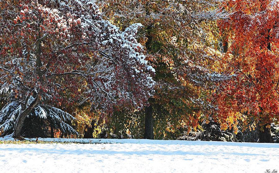 Autumn Photograph - Autumn Snowstorm by Kimberly Little