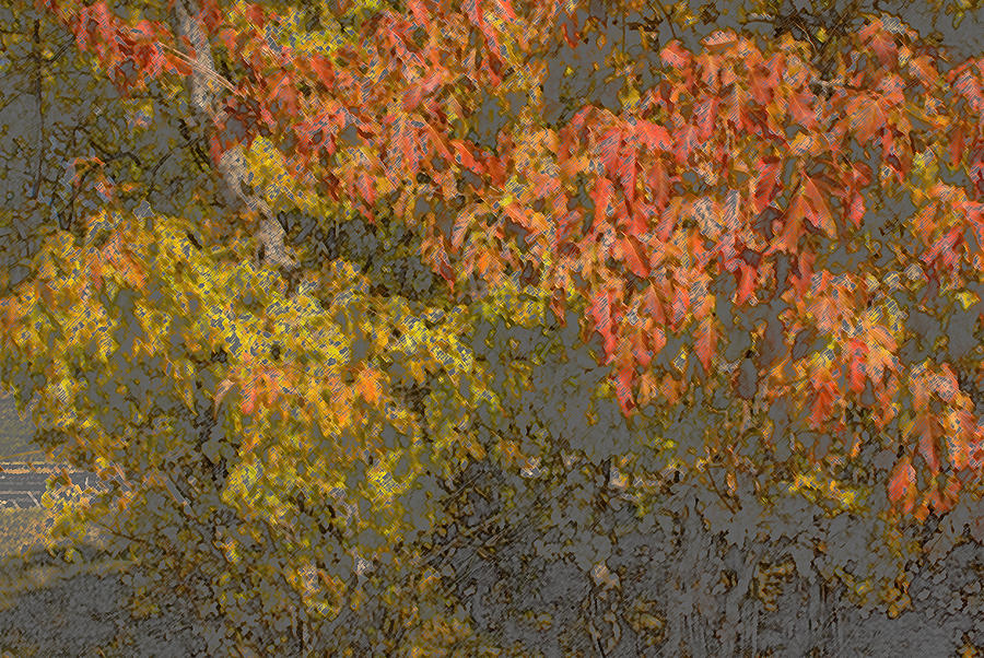 Leaves Photograph - Autumn Splash by Joanne Smoley