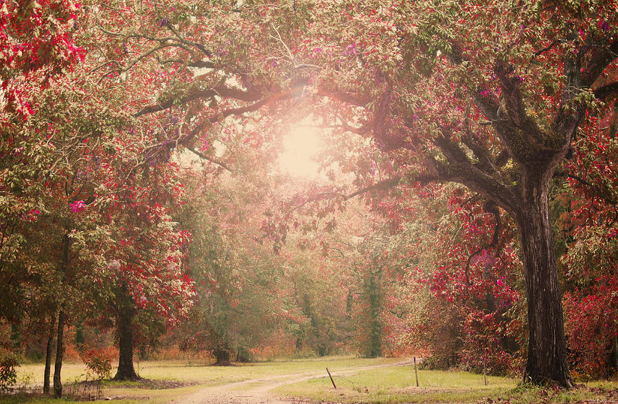 Enchanted Photograph - Autumn Splendor by Southern Tradition