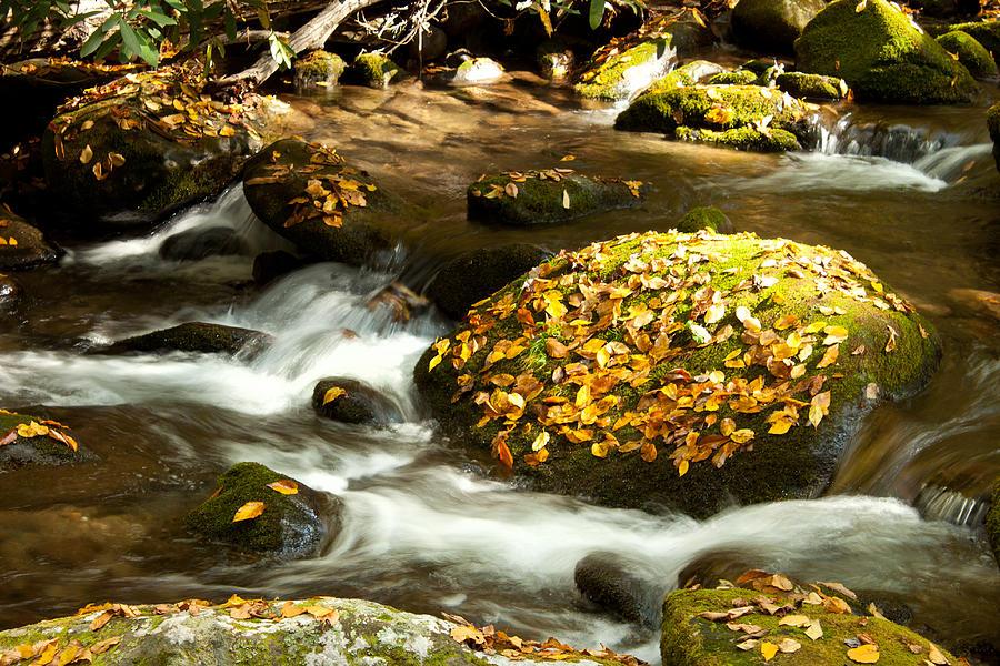Autumn Photograph - Autumn Stream by Lena Auxier