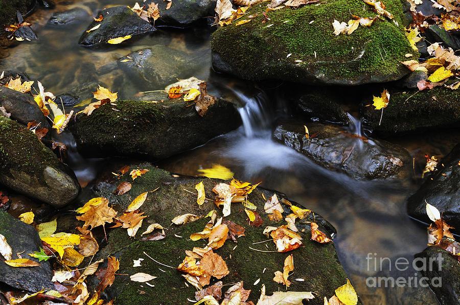 West Virginia Photograph - Autumn Stream Monongahela National Forest by Thomas R Fletcher