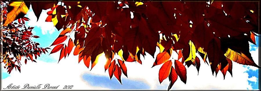 Pattern Photograph - Autumn Sun Glory by Danielle  Parent