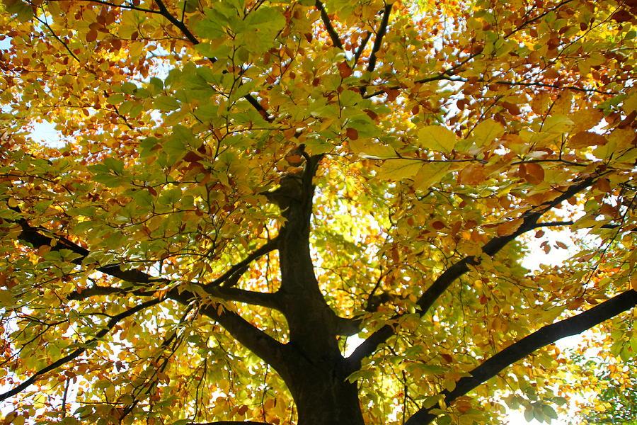 Tree Photograph - Autumn Sun by Karen Grist