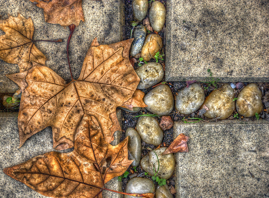 Autumn Photograph - Autumn Texture by Wayne Sherriff