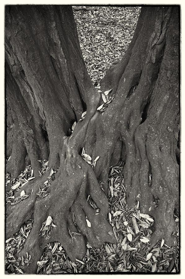 Autumn Photograph - Autumn by Tibor Puski