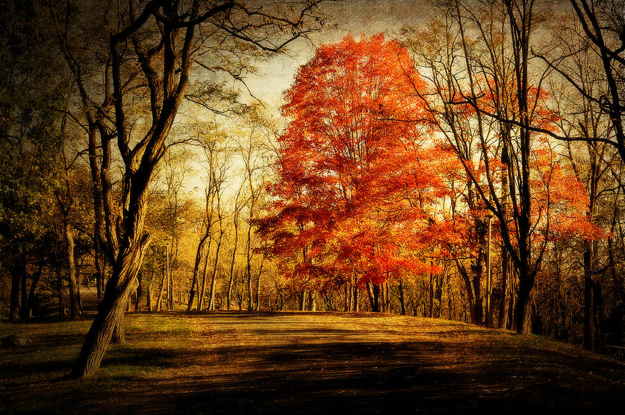 Fall Photograph - Autumn Trail by Kathy Jennings