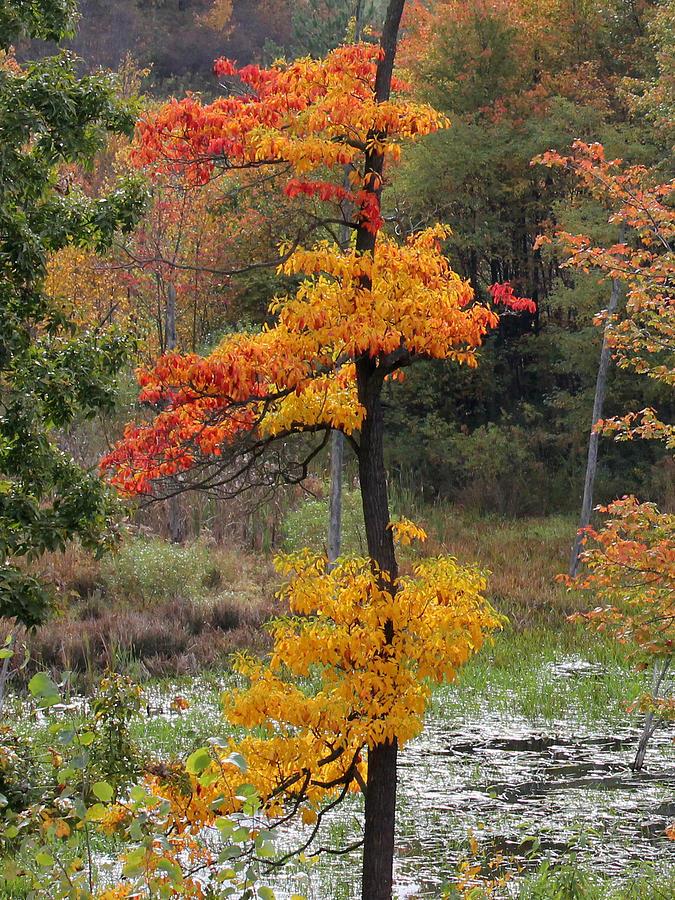 Autumn Photograph - Autumn Tree by Mark Moore