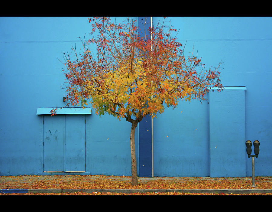 Autumn Tree Photograph by Monica Murphy