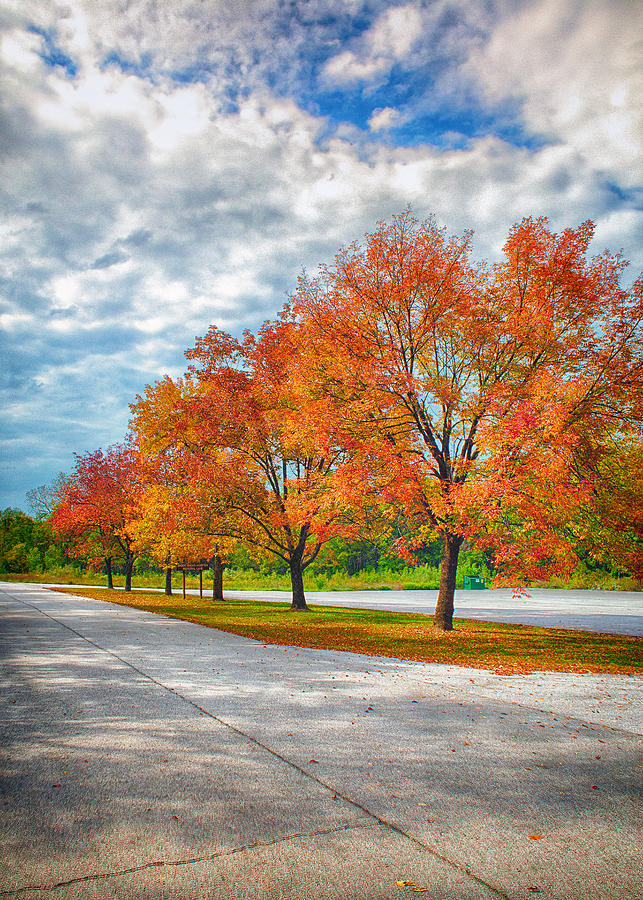 Lake Photograph - Autumn Trees At Busch by Bill Tiepelman