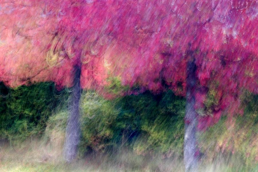 Trees Photograph - Autumn Trees by Carol Leigh
