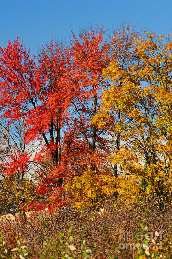 Autumn Photograph - Autumn Trees by HD Connelly