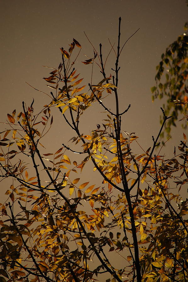 Pure Photograph - Autumn Trees II by Dickon Thompson