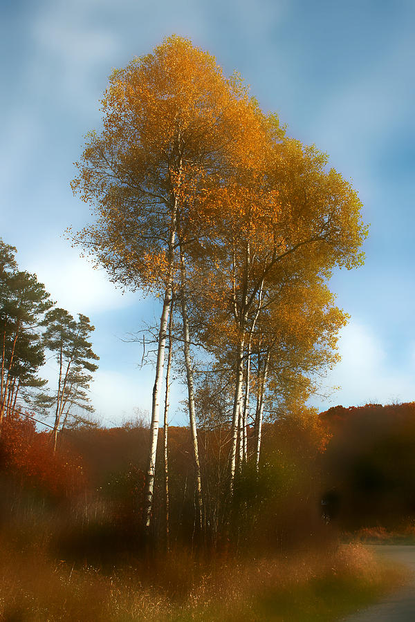 Trees Photograph - Autumn Trees by Jim Painter