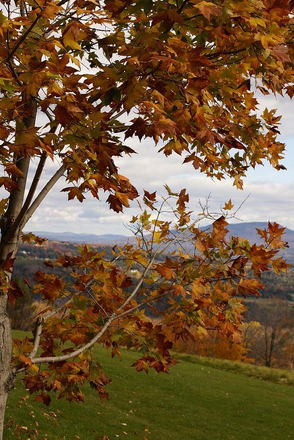 Autumn Photograph - Autumn Trees by Margaret Steinmeyer