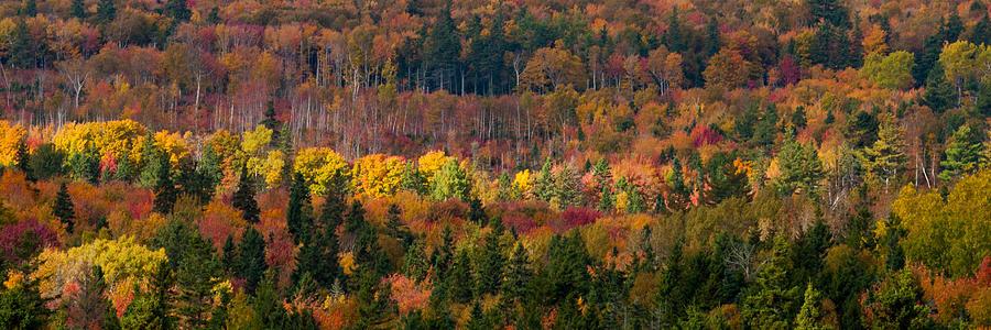 Autumn Photograph - Autumn Trees Panorama by Matt Dobson