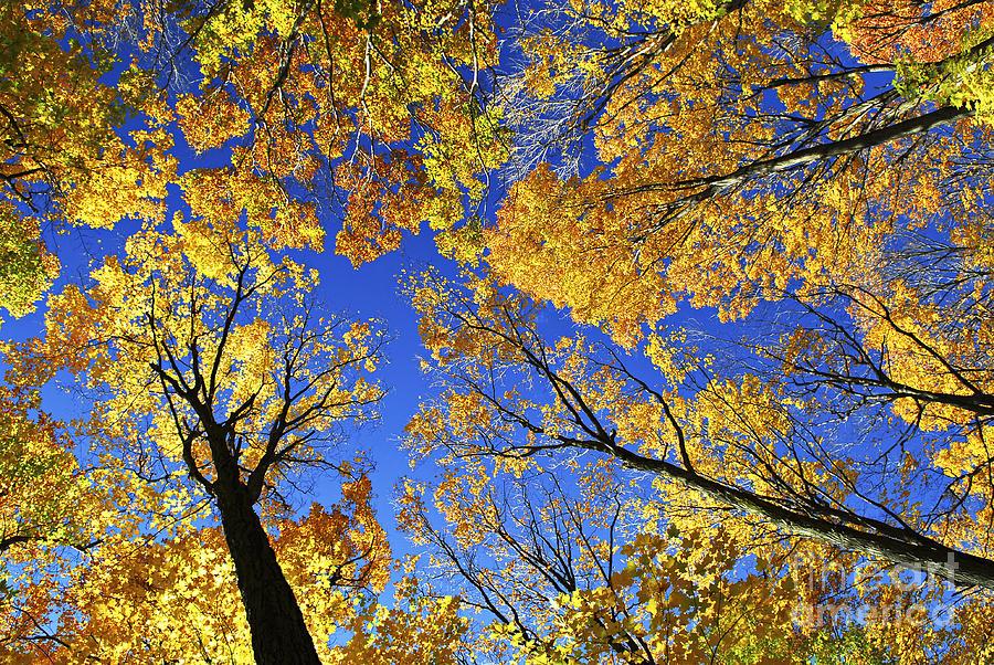 Autumn Photograph - Autumn Treetops by Elena Elisseeva