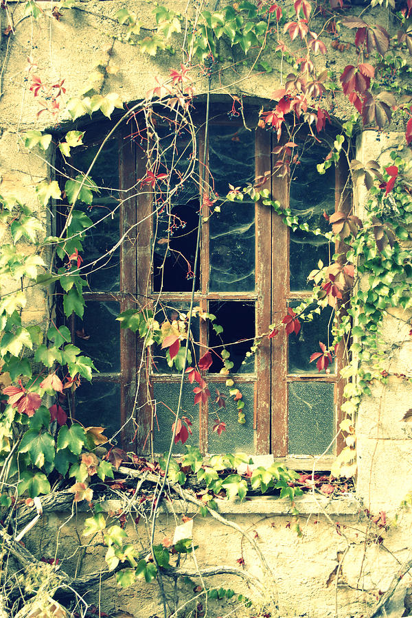 Abandoned House Photograph - Autumn Vines Across A Window by Georgia Fowler