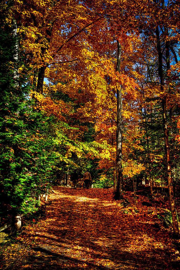Adirondack's Photograph - Autumn Walk by David Patterson