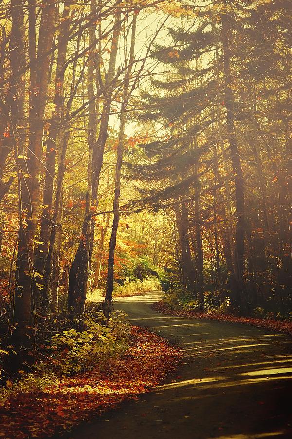 Autumn Photograph - Autumn Walk by Gary Smith