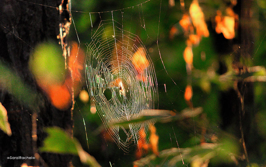 Autumn Photograph - Autumn Web by Sarai Rachel