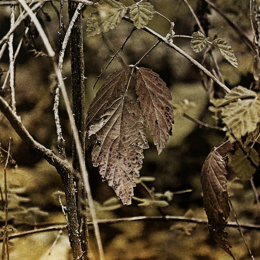 Leaves Photograph - Autumn Whispers by Bonnie Bruno
