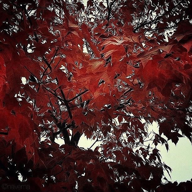 Fall Photograph - Autumnal Leaves by Natasha Marco
