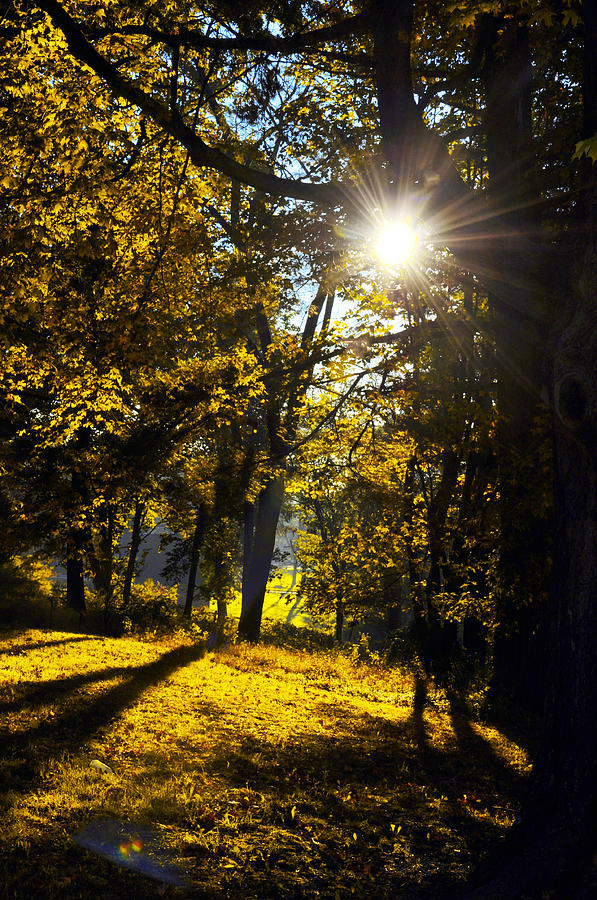 Autumn Photograph - Autumnal Morning by Bill Cannon