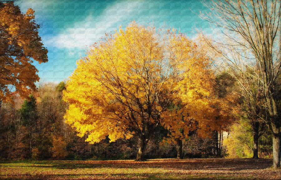 Autumns Beauty Photograph