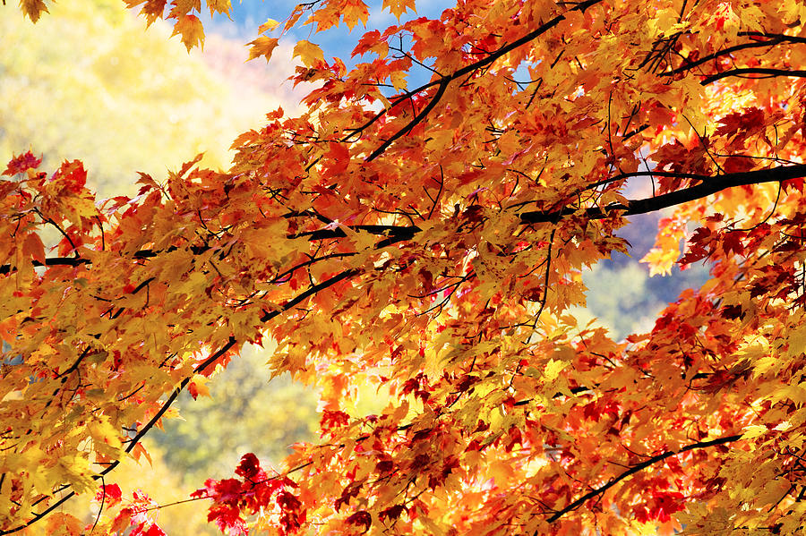 Golden Leaf Photograph - Autumns Gold Great Smoky Mountains by Rich Franco
