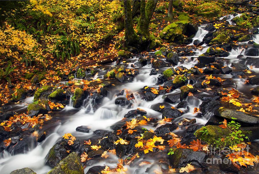 Autumn Photograph - Autumns Staircase by Mike  Dawson