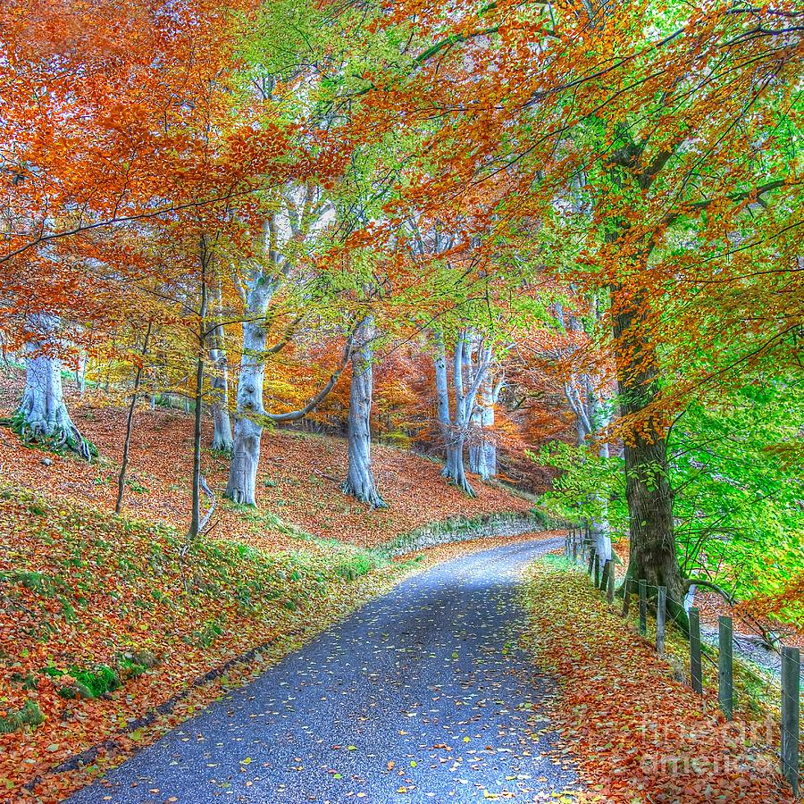 Colourful Photograph - Autumns Way Vert by John Kelly