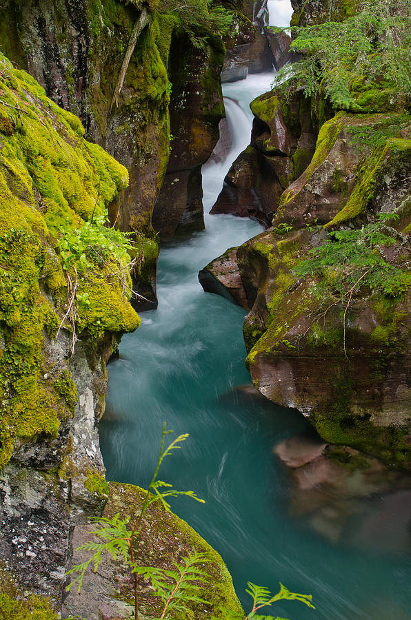 Glacier National Park Photograph - Avalanche Gorge by Greg Nyquist