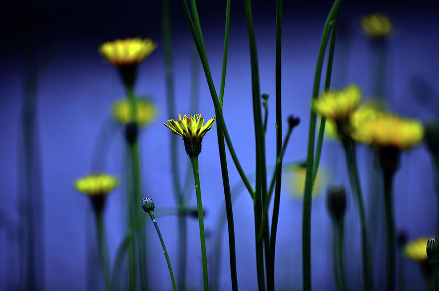 Horizontal Photograph - Avatar Flowers by Mauro Cociglio - Turin - Italy