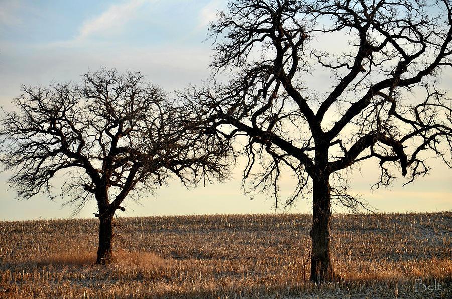 Tree Photograph - Awaiting Winter by Christine Belt