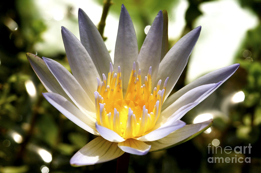 Lily Photograph - Awaken The Spirit by Pamela Gail Torres