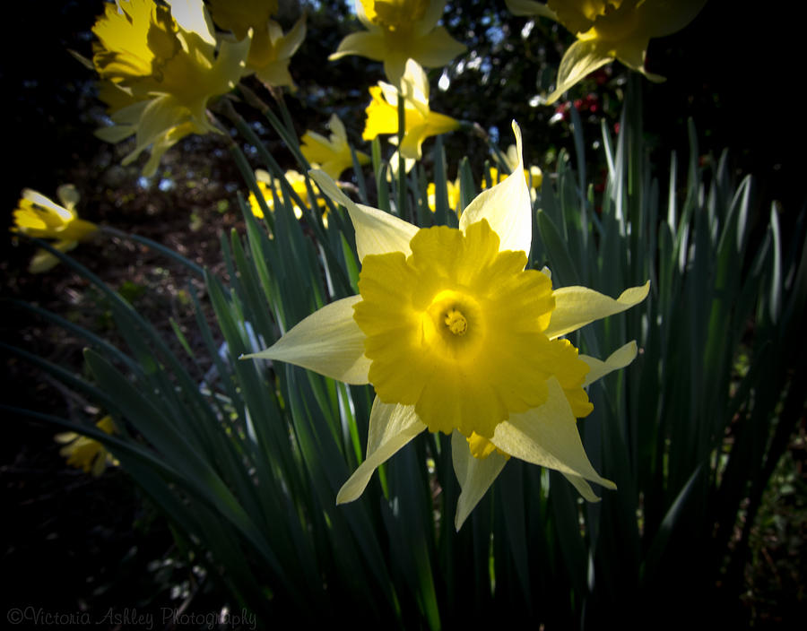 Spring Photograph - Awakened by Victoria Ashley