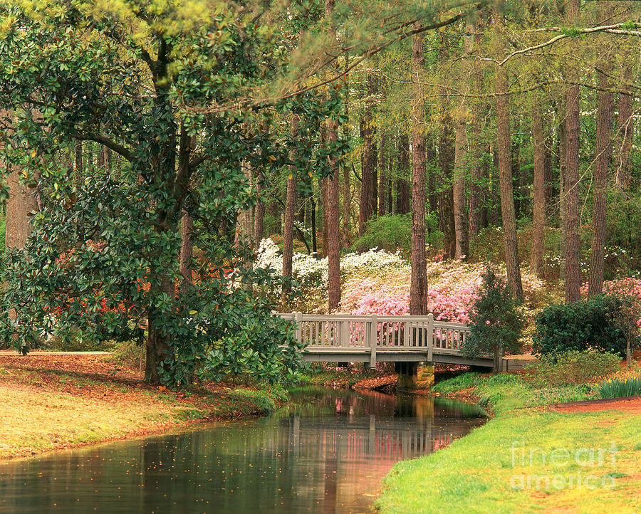 Nature Photograph - Azaleas And Footbridge by Michael Hubrich and Photo Researchers