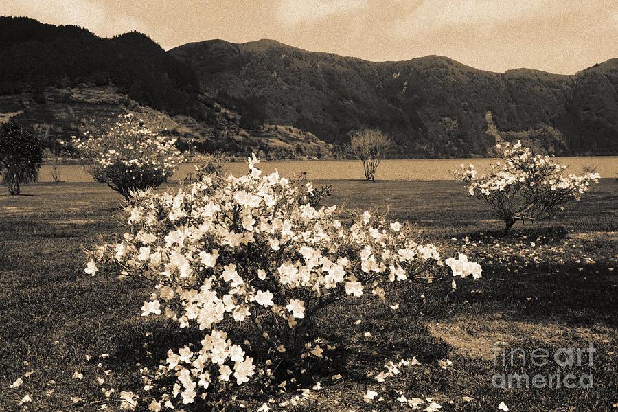 Azaleas Photograph - Azaleas By The Lake by Gaspar Avila