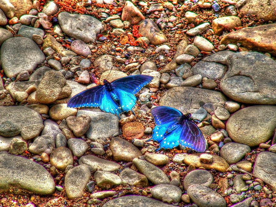 Butterflies Photograph - Azul by Andrew Webb