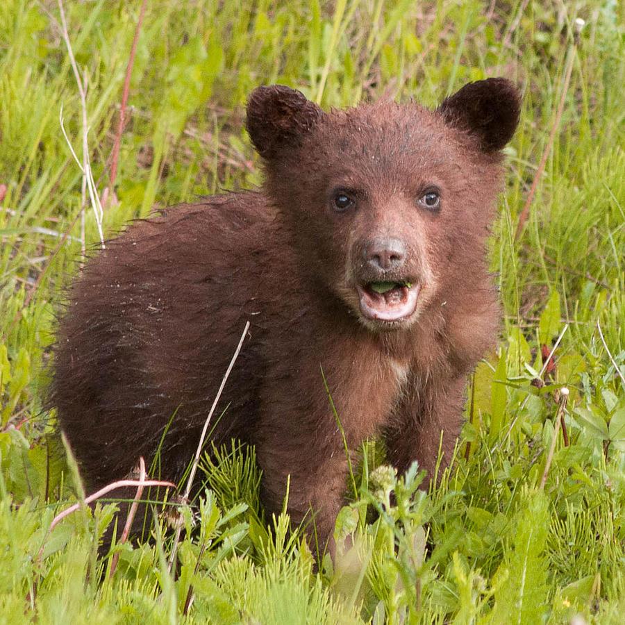Baby Bear Etta Kovalsky on The Three Bears