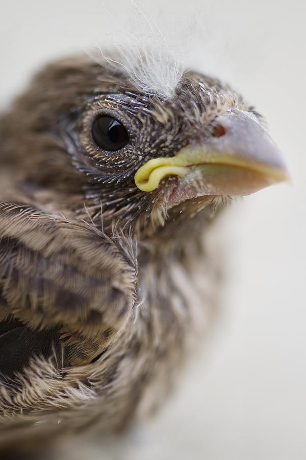 Baby Bird Photograph - Baby Bird 3 by Jessica Velasco
