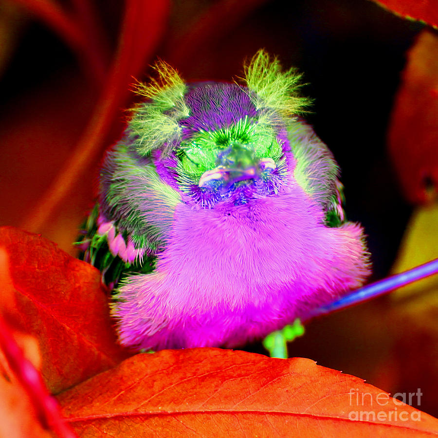Baby Bird Of A Different Color Photograph by Smilin Eyes ...