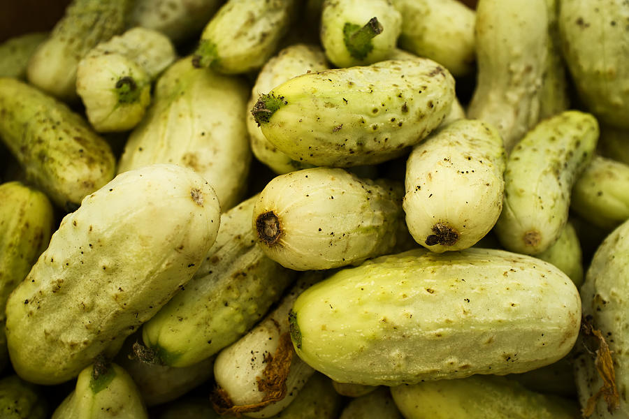 Baby Cucumbers Photograph - Baby Cucumbers by Tanya Harrison