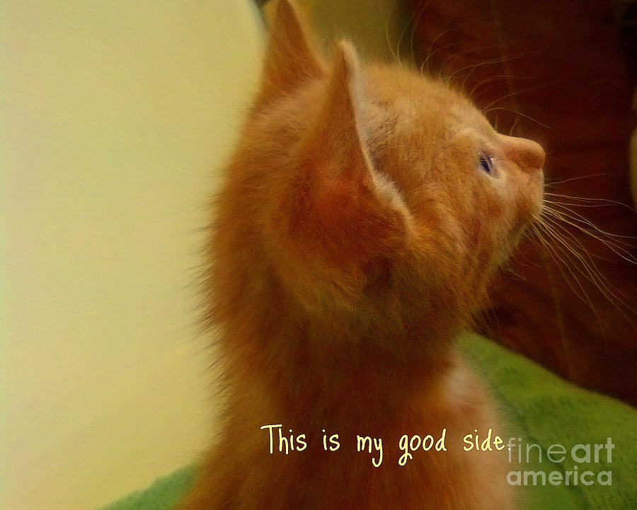 Garnett Jaeger Photograph - Baby Kitty by Garnett  Jaeger