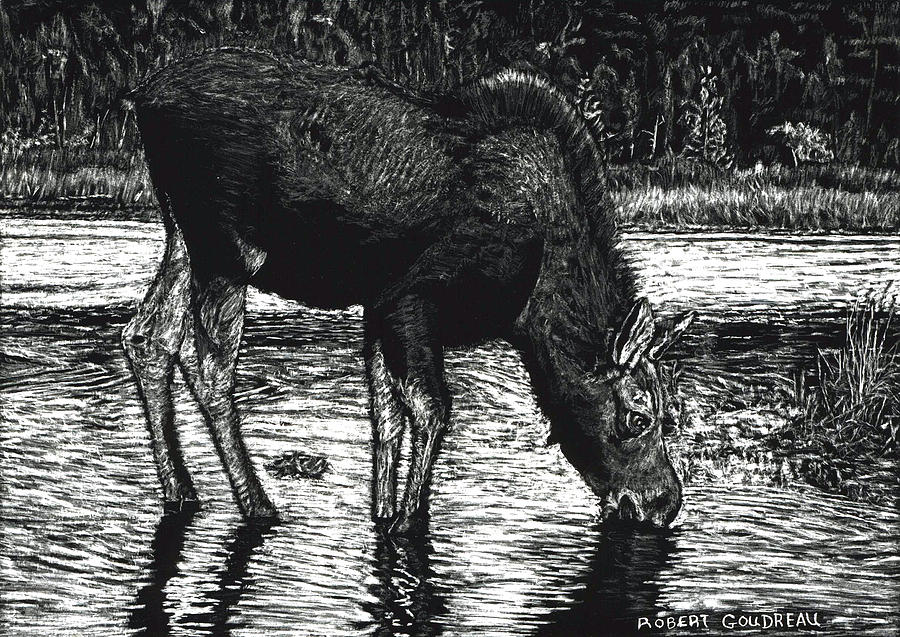 Moose Drawing - Baby Moose Grazing by Robert Goudreau
