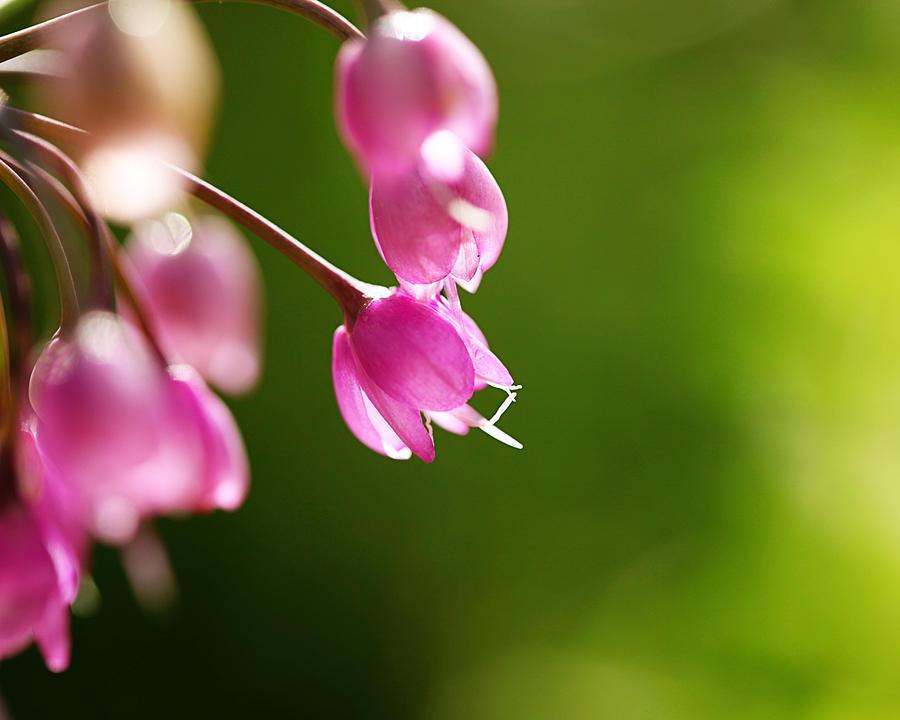 Pink Photograph - Baby Pink Buds by Amelia Matarazzo