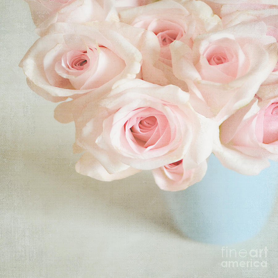 Roses Photograph - Baby Pink Roses by Lyn Randle